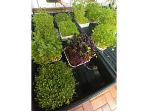 Quick Harvest Microgreens Grow Tray
