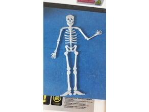 skeleton (flat)
