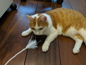 Emergency Cat Wand / Teaser / Toy