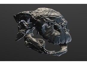 Euoplocephalus Skull