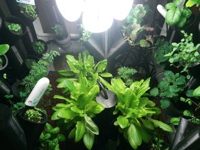 Configurable Hydroponic System