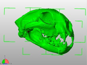 Fully Printable Cougar Skull