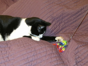 Cat Toy - Articulated Octopus