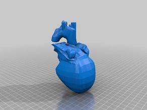 human heart anatomical