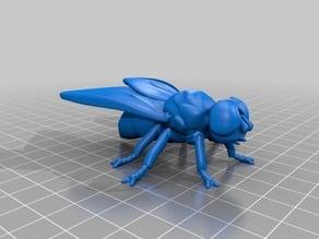蠅(Fly)3Dデータ