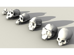 Evolutionary Skulls Set