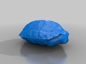 Turtle Shell - 3Dscan