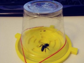 Solo cup bee holder