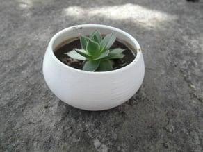 Parametric succulent planter