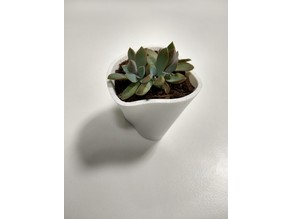Succulent Pot - Entropy