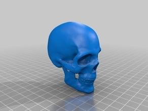 頭蓋骨(Skull)3Dデータ