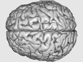 "Printable ""Visible Human"" Brain"