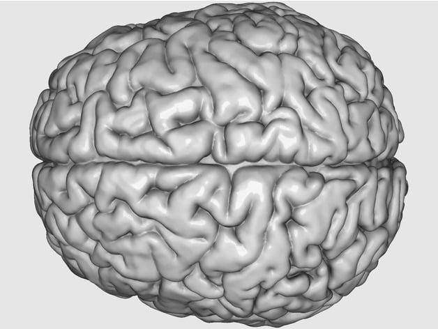 image regarding Brain Printable identified as Printable \