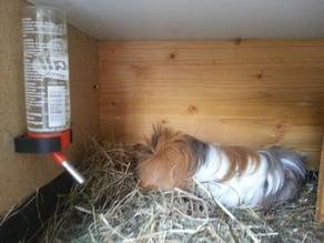 Trinkflaschenhalter - Bottle holder for small pets, Rat, Hamster, Guinea Pig, Rabbit, Mouse, ...