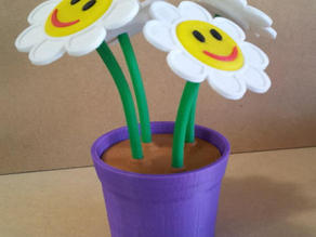Smiley flowers in pot