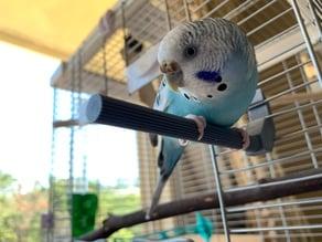 Pet Parakeet Cage Perch (STAR)