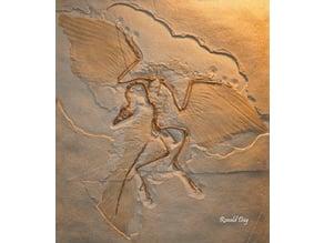 Archaeopteryx Dinosaur Fossil