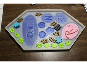 Plant Cell Puzzle