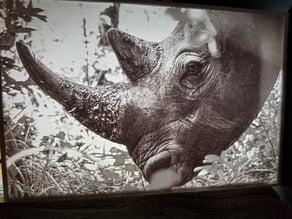Rhino Lithophane
