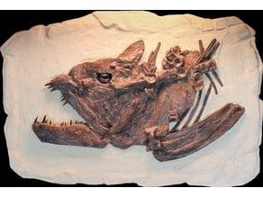 Xiphactinus Dinosaur Fossil