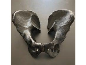 Human male pelvis