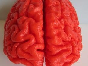 Human Brain, Full Scale