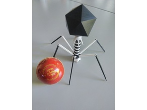 Articulated phage model