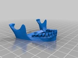 Better Jaw for Human Skull