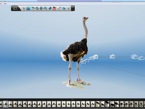 African Ostrich Capture