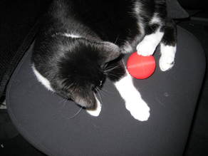 Cat Food Ball