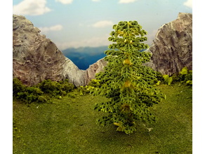 Vegetation C - Spruce