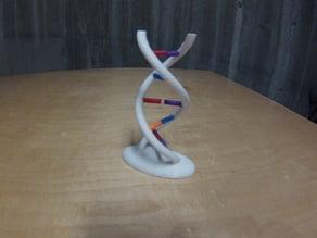 Interactive DNA Model