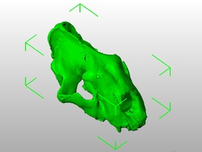 Sabertooth cat (Smilodon californicus) skull, scanned from real fossil