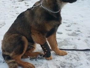 Dog Leg Cast / Brace