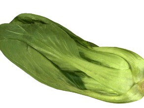 The Chinese Cabbage