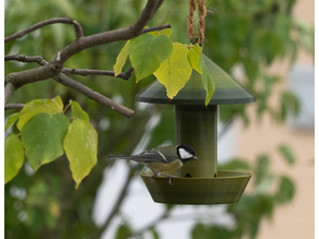 Vogel Futterspender / Bird food dispenser