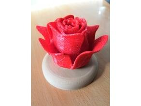 Rose avec support