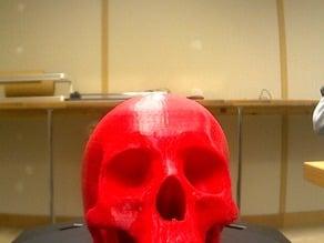 Scan of Skull (demo)