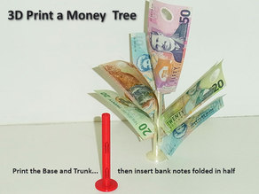 Money Tree... Money does grow on trees!