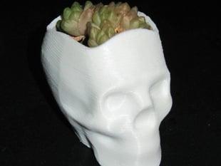 Isabelle the Skull Vase