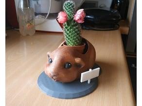 Guinea pig flower pot - pot de fleurs cochon d'inde