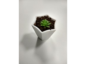 Succulent Pot - 6 Points