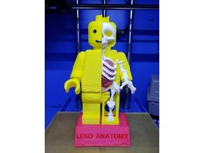 Lego Minifigure Anatomy