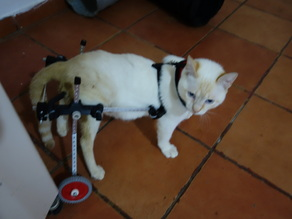 Pet wheelchair (small)
