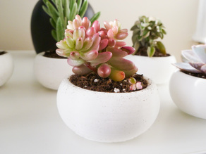 Mini Succulent Planter Bonsai Style
