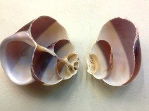 Hermit Crab Shell Project