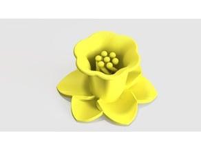 Daffodil with twist stamen