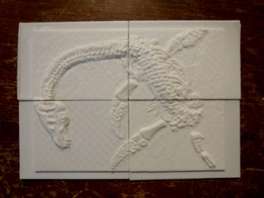 Plesiosaurus Fossil