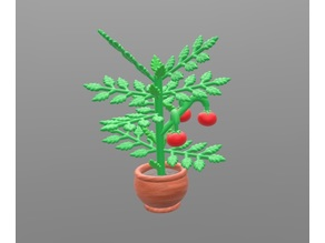 Tomato plant with removable tomatoes