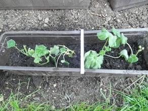 Planter stablizer clamb (Customizer)